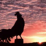 Dipatok Ayam