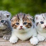 Nama-Kucing-Kamu